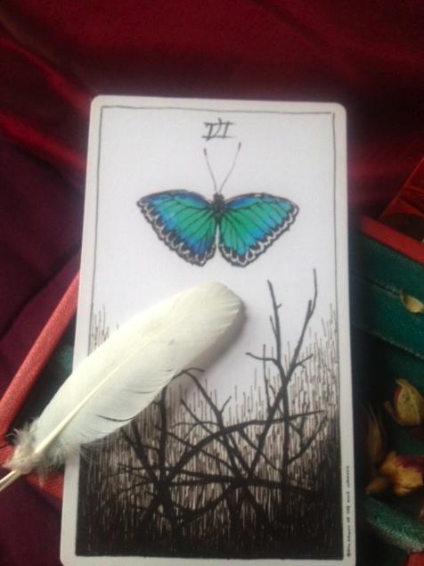 wild-unknown-butterfly.jpg