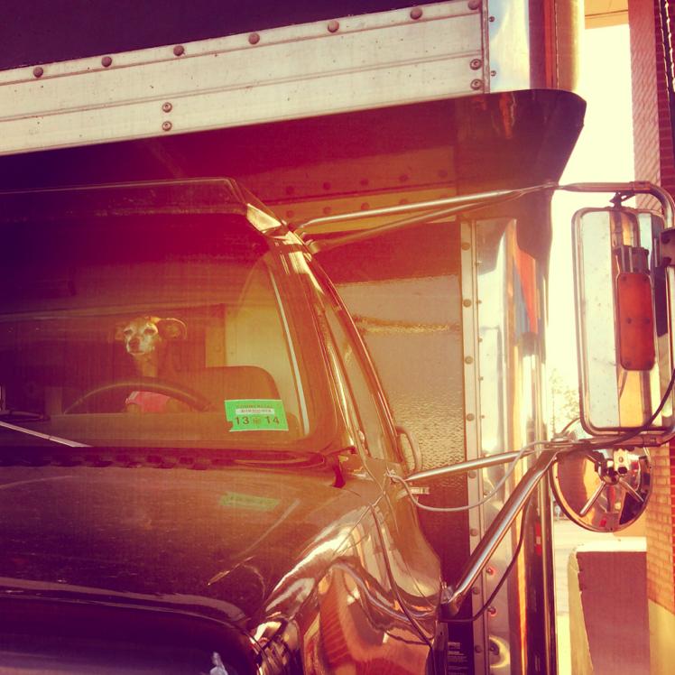 Dog-drives-a-truck.jpg